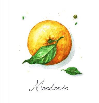 Naklejka Akwarela Food - mandarynka lub pomarańcza