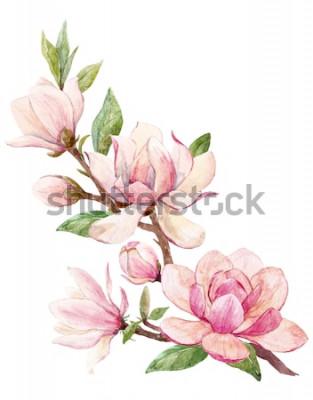 Naklejka Akwarela ilustracja gałęzi z kwiatami różowy magnolia kwiat wiosna karty