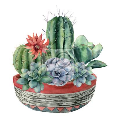 Akwarela kaktus z soczyste w doniczce. Ręcznie malowane cereus, echeveria, echinocactus grusonii z czerwonymi i niebieskimi kwiatami na białym tle. Ilustracja do projektowania, tkaniny lub tła.