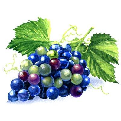 Naklejka akwarela kiść ciemnych winogron