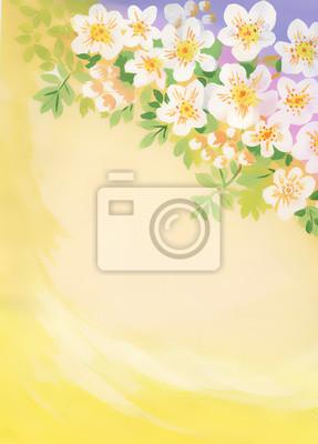 Akwarela kwiat wiśni z copyspace
