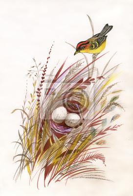Akwarela malowane ptaki i gniazdo z jajami