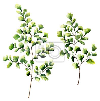 Akwarela miłorzębu liści paproci i gałęzie. Ręcznie malowane elementy rośliny paproci. Floral ilustracji samodzielnie na białym tle. Projektowania, tekstyliów i tła.