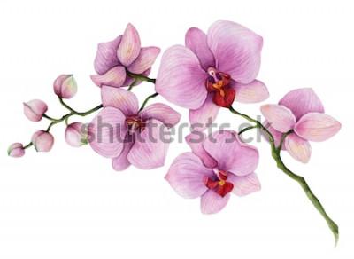 Naklejka Akwarela orchidea oddział, ręcznie rysowane ilustracja kwiatowy na białym tle na białym tle.