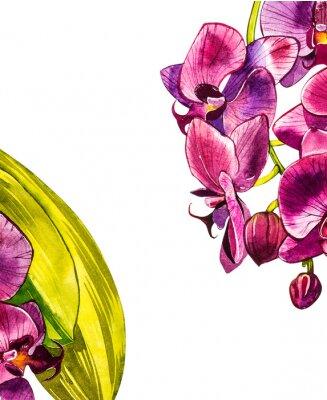 Naklejka Akwarela orchidea oddział, ręcznie rysowane ilustracja kwiatowy na białym tle na białym tle. Flora akwarela ilustracja, malarstwo botaniczne, rysunek odręczny.