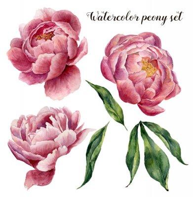 Naklejka Akwarela piwonii ustawiony. Zabytkowe elementy kwiatowe z kwiatów piwonii i liści samodzielnie na białym tle. Ręcznie rysowane ilustracji botanicznej dla projektu