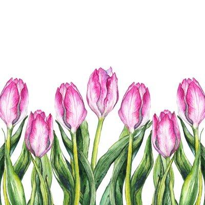 Naklejka Akwarela ró? Owy tulipan kwiat charakter granicy ramki