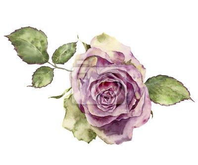 Akwarela róża z liści. Ręcznie malowane rocznika kwiatowy ilustr