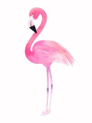 Naklejka Akwarela różowy Flaming. Ilustracji wektorowych