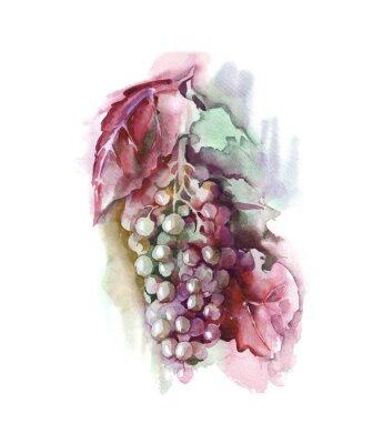 Naklejka Akwarela winogron
