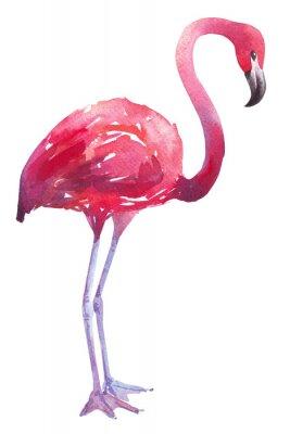 Naklejka Akwarele ilustracji Czerwonak