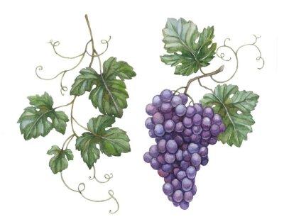 Naklejka Akwarele ilustracji z liści winogron