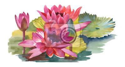 Akwarele ilustracji z różowym lilii wodnej