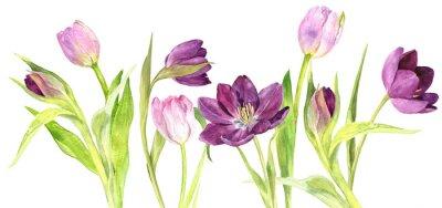Naklejka Akwarele purpurowe i różowe tulipany