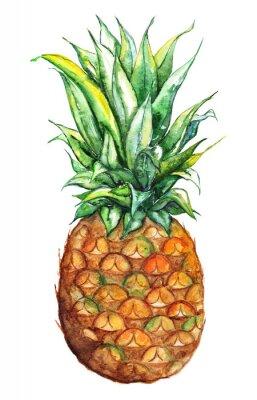 Naklejka Akwarele ręcznie rysowane ananas egzotycznych owoców tropikalnych odizolowane