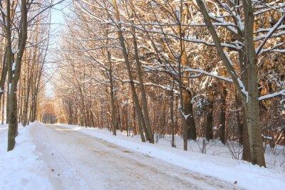 Aleja w parku zimowym.