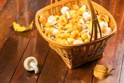 Naklejka Amanita sp. grzyb w koszyku bambusa