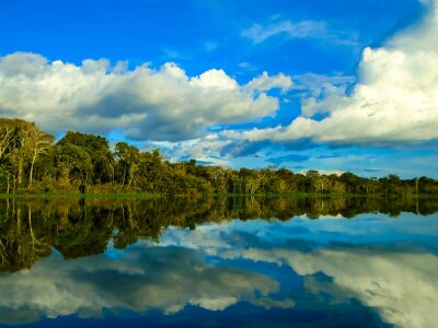 Naklejka Amazonka