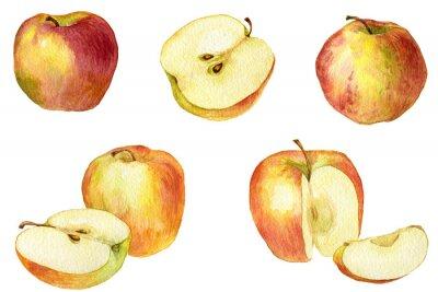 Naklejka Apple drawing by watercolor