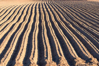 Naklejka Arable land, furrows texture background. Agriculture, field on farm, soil, countryside, agronomy.