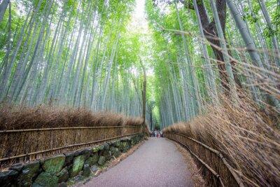 Naklejka Arashiyama Bamboo Grove Kioto, Japonia.