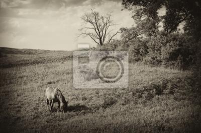 archiwalne zdjęcie krajobrazu z konia na lato