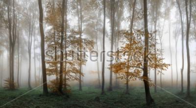 Naklejka Autumn foggy forest. Balkan Mountains, Bulgaria.