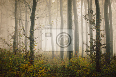 autumn forest landscape with trees in mist
