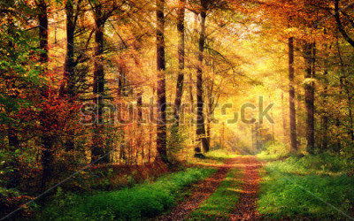 Naklejka Autumn forest scenery with rays of warm light illumining the gold foliage and a footpath leading into the scene