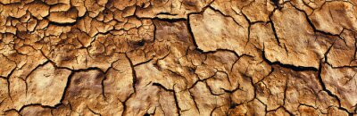 Naklejka Background and texture of cracked dry earth. Panorama.