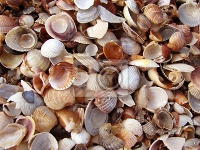 Background Shells