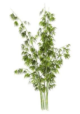 Naklejka Bamboo Tree