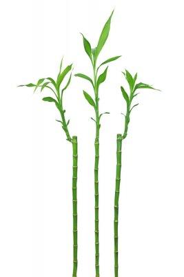 Naklejka Bambou