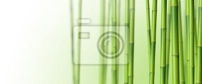 Bambous sur fond blanc 3