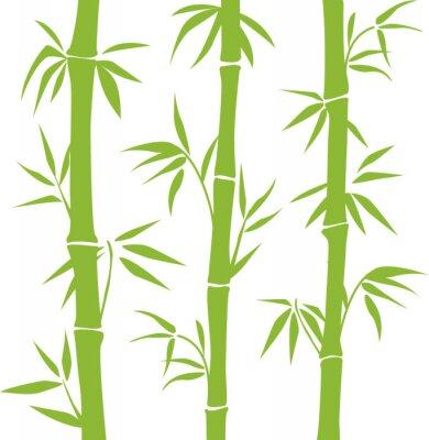 Naklejka Bambus
