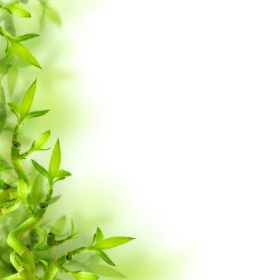 Naklejka Bambus i zielone liście, tło