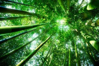 Naklejka Bambus lesie - zen pojęcie