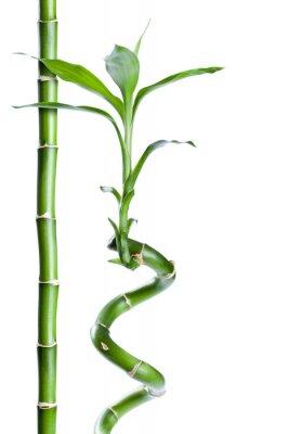 Naklejka Bambusa zen