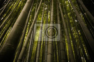 Naklejka Bambusowy Las w Kioto