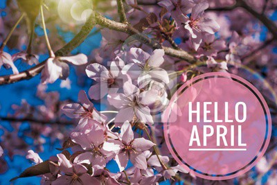 Naklejka Banner hello april. Hi spring. Hello April. Welcome card We are waiting for the new spring month. The second month of spring.