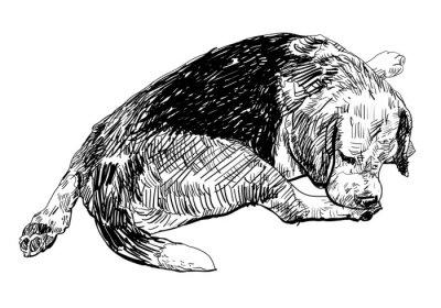 Naklejka Beagle jest gryzienie cicho na jego nodze.