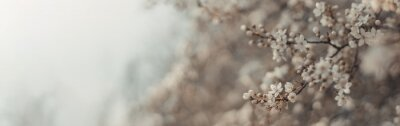 Naklejka Beautiful floral spring abstract nature background with blooming cherry tree branches on background, landscape panorama, copy space.
