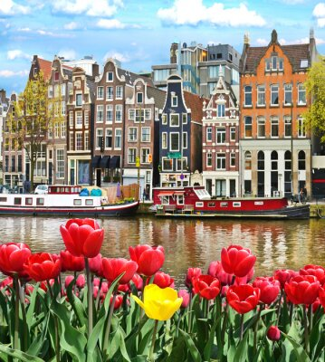 Naklejka Beautiful landscape with tulips and houses in Amsterdam, Holland