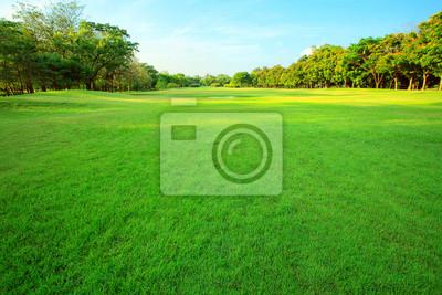 Naklejka Beautiful Morning light w publicznym parku z zielonym polu trawy w