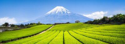 Naklejka Berg Fuji i Teefelder w Japonii