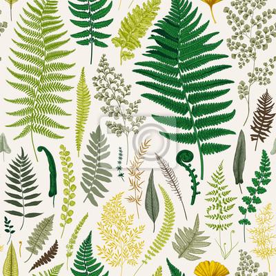 Bez szwu deseń. Paprocie. Vintage wektor botaniczne ilustracji. Kolorowy
