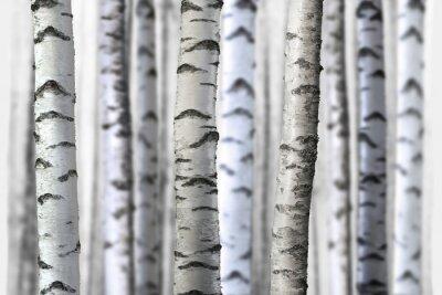 Naklejka bezszwowe brzozy