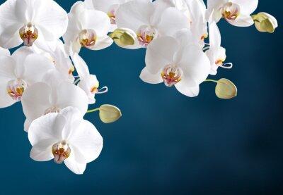 Naklejka Biała orchidea