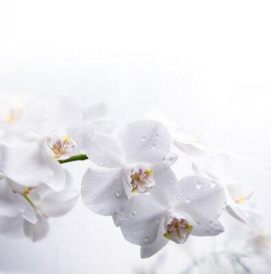 biała orchidea na wodzie