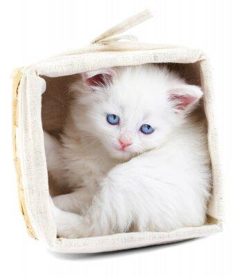 biały kociak w koszu.